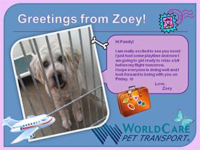 Zoey Jets to Beijing