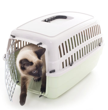 How can I Prepare my Pet for Travel?