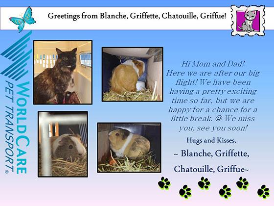 Blanche, Griffette, Chatouille, Griffue