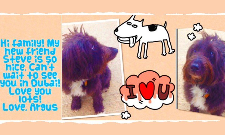 Argus Gets a Haircut in Dubai and Rachel Reports On His Move