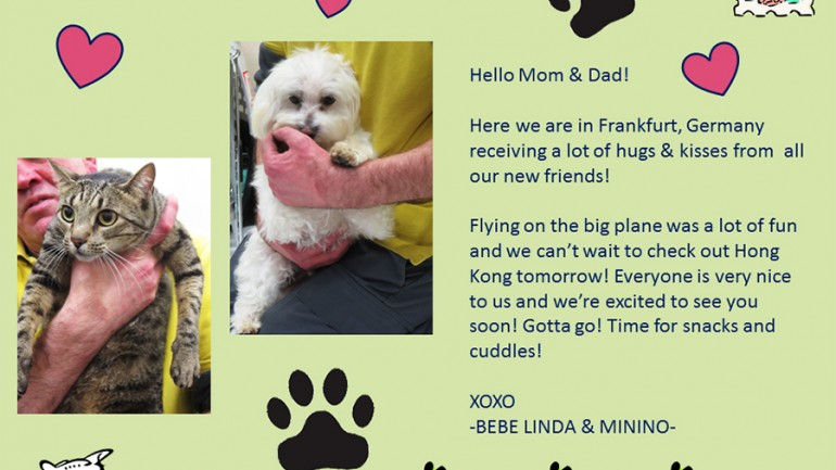 The Amazing Adventures of Minino and Bebe Linda, Part II