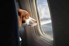 Latest Data Shows Pet Travel is Safest in Years