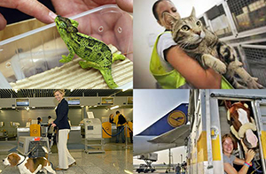 Serving 110 Million Animal Passengers at the Frankfurt Animal Lounge
