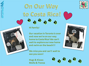 Happy Homecoming for French Bulldogs, Mono and Trenza