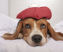 OUTBREAK OF CANINE FLU VIRUS Continues to Affect More States
