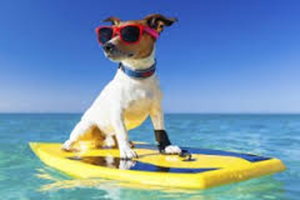 What To Know When Four-Legged Friends Travel During Summer