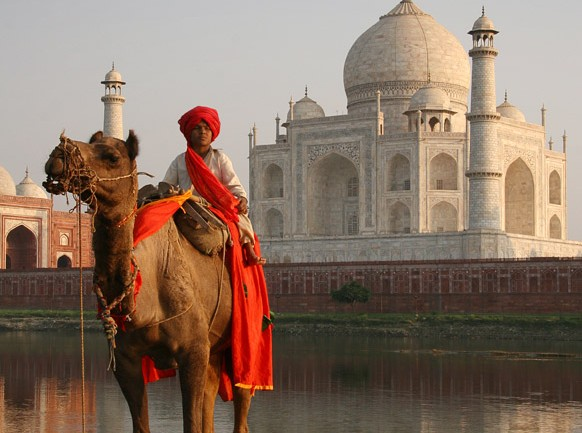 What Are the Most Important Things To Know When Moving Pets to India?