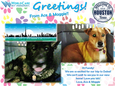Smooth Sailing for Ace and Maggie