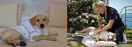 La Dolce Vita: Pet Friendly Italy