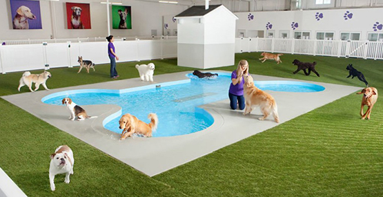 PET PARADISE FOR AIRLINE PAW-SSENGERS TO OPEN AT JFK